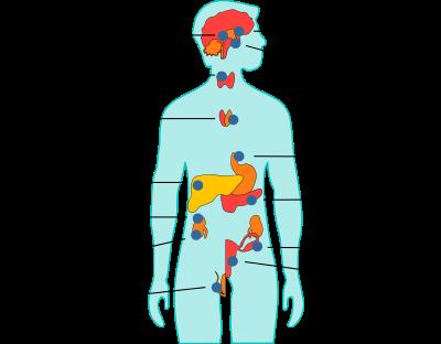 Menschliche Körperhormone - antikörper-online.de